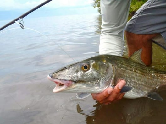 Fly fishing for bonefish on the flats of the Lower Keys