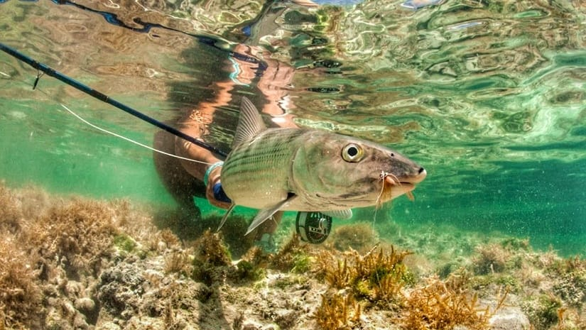 Fly fishing for bonefish in Key West, FL