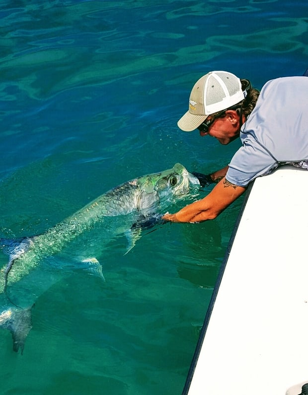 Tarpon fly fishing key west fly fishing for Fly fishing florida